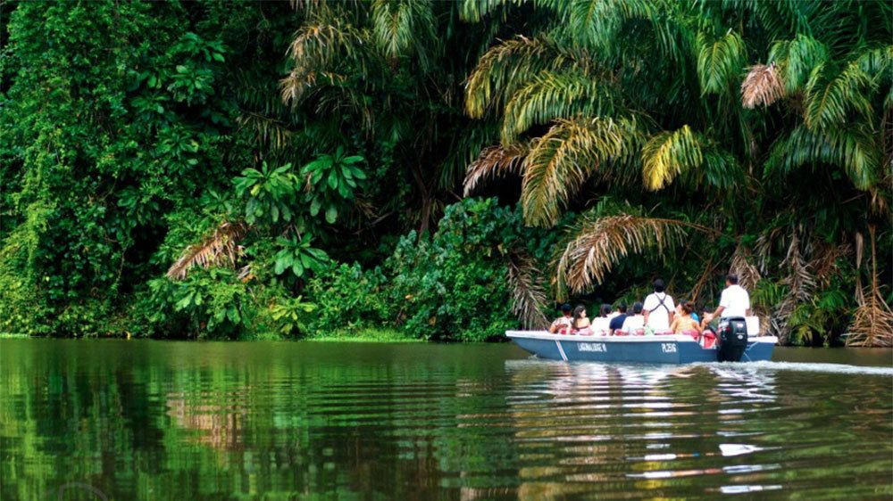 A boat with passengers cruising down the calm water through the mangrove forest in Tortuguero National Park in Costa Rica
