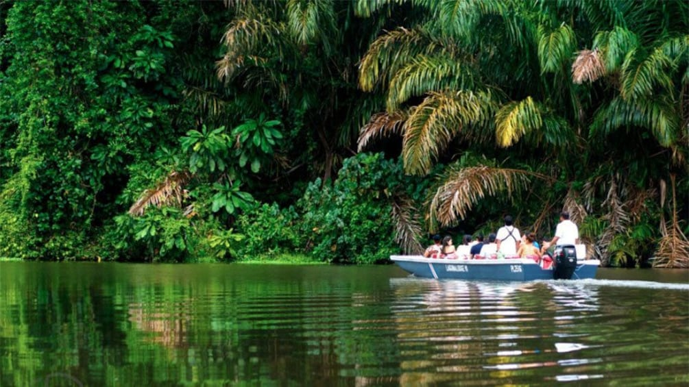 Show item 1 of 10. A boat with passengers cruising down the calm water through the mangrove forest in Tortuguero National Park in Costa Rica