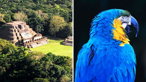 Combo image of ruins and macaw at zoo in Belize