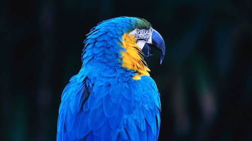 Parrot at the Belize Zoo in Belize