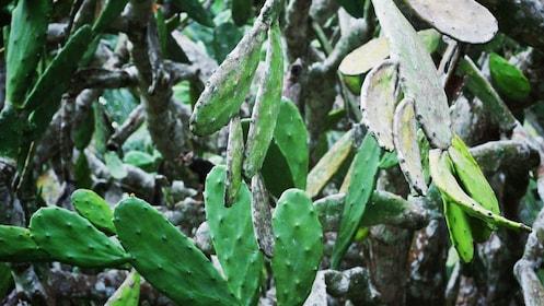 Plants in Belize