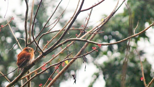 Bird on a branch in Belize