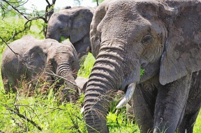 Matopos to Hwange National Park!