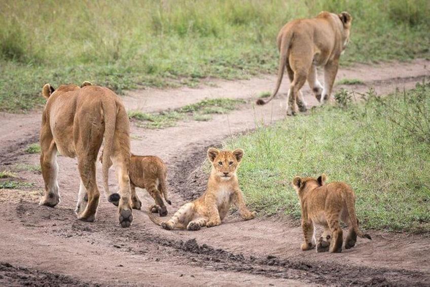 Day Trip to Hwange National Park from Bulawayo!