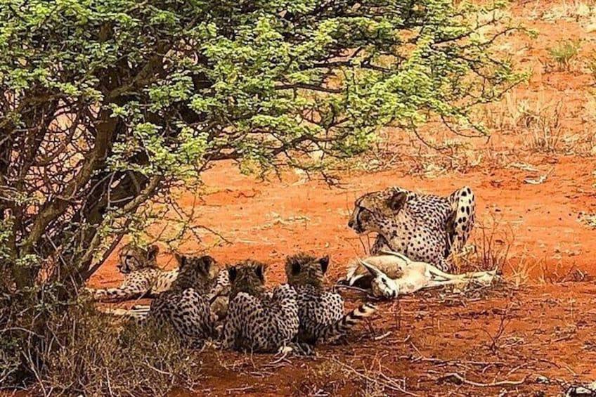 Time to feed in Hwange National Park - Zimbabwe