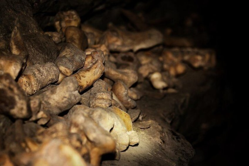 Part of Rat's Nest Cave's rich history includes the presence of bones that are up to 7000 years old.