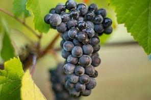Vineyard Walk & Picnic