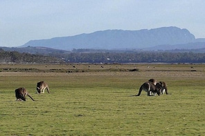 Spend a day in one of Tasmania's best wildlife National Park's