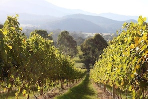 Pizzini Wines Old World Flavours New Vintage Wine Tasting and Picnic