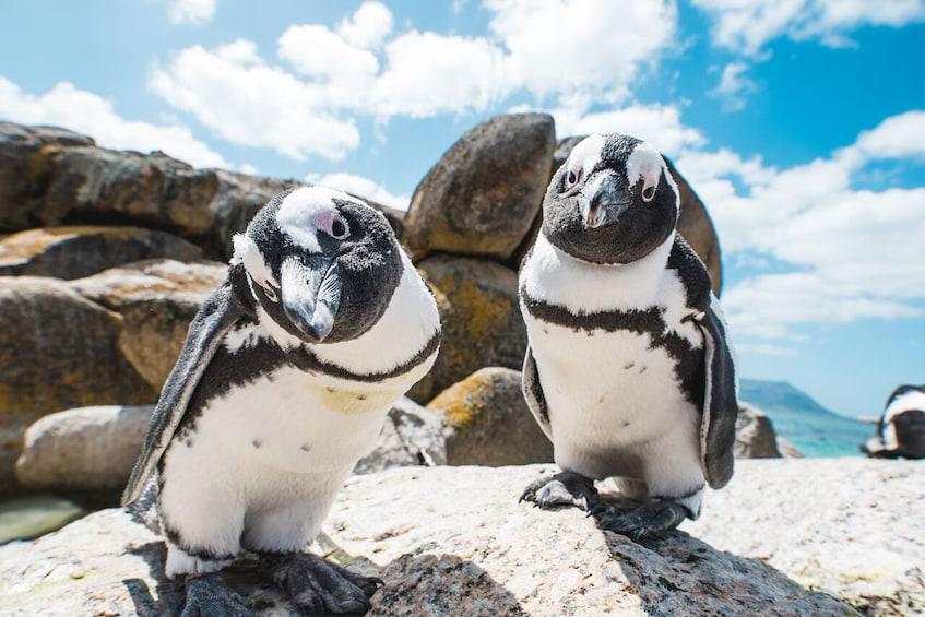Apri foto 3 di 10. Cape Peninsula Full-Day Tour