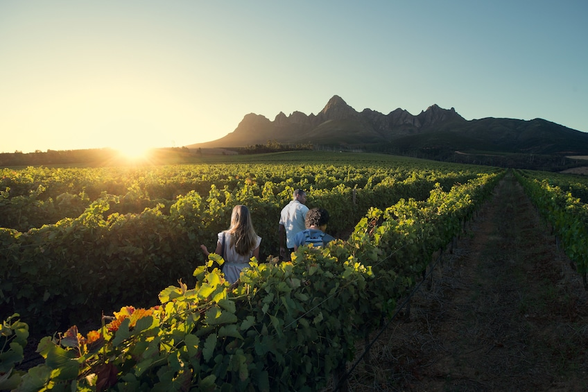 Show item 1 of 10. Cape Winelands Full-Day Tour