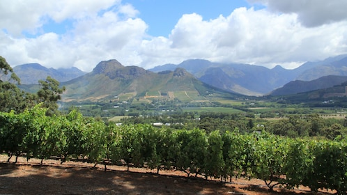 Visiting a vineyard in South Africa