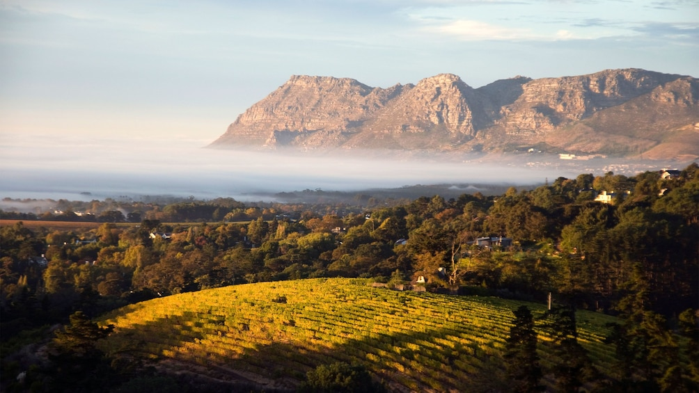 Show item 2 of 10. Vineyard surrounded by mountains in South Africa