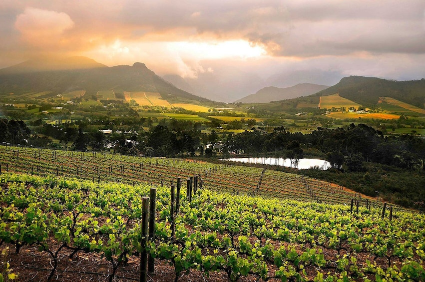 Show item 3 of 10. Cape Winelands Full-Day Tour