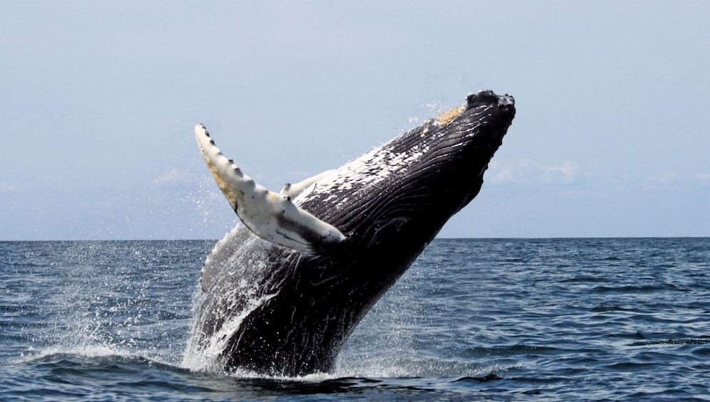 Show item 3 of 10. Whale Watching Full-Day Tour