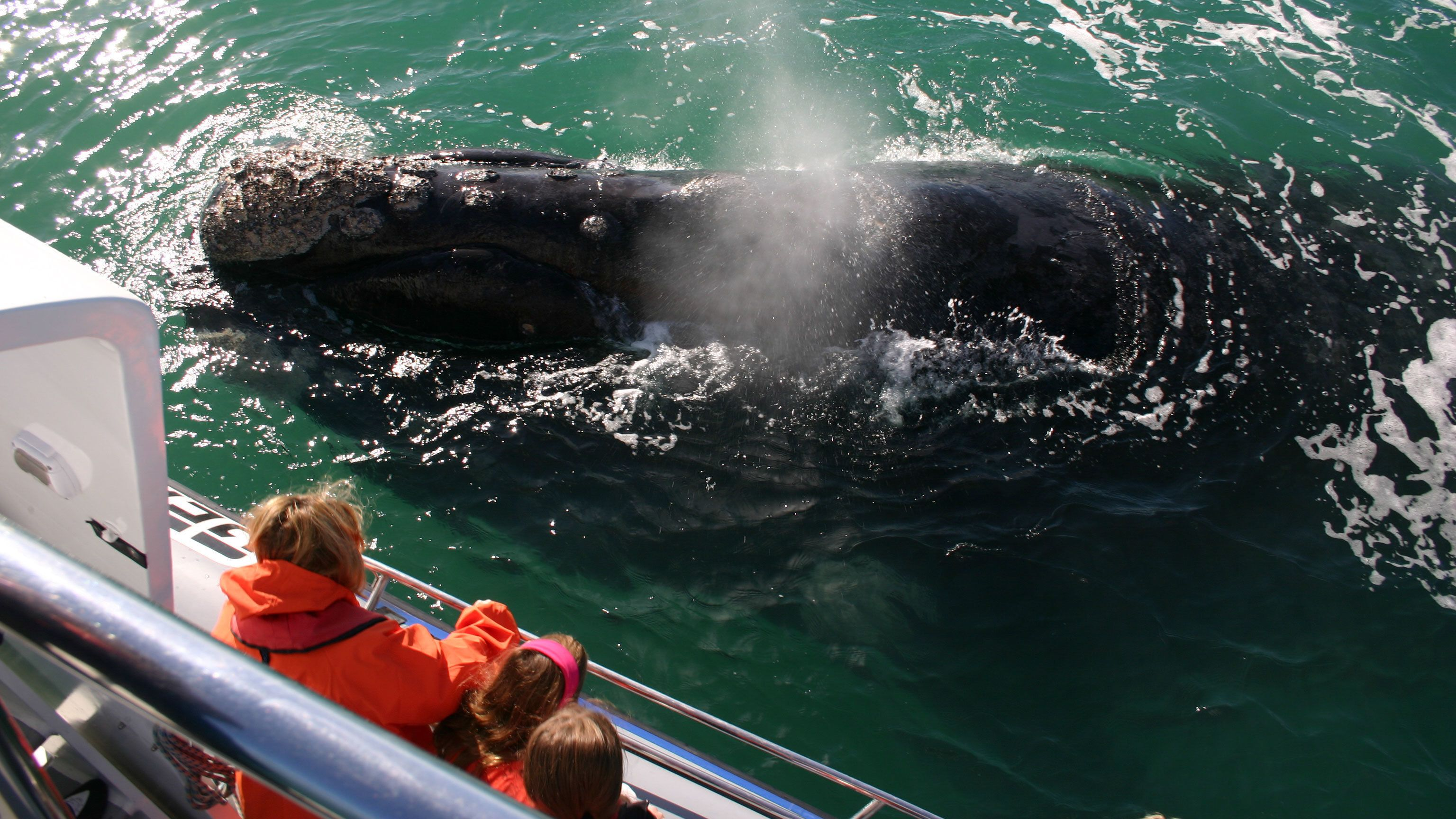 Close encountering a whale in South Africa