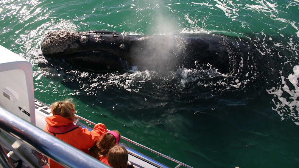 Show item 2 of 10. Close encountering a whale in South Africa