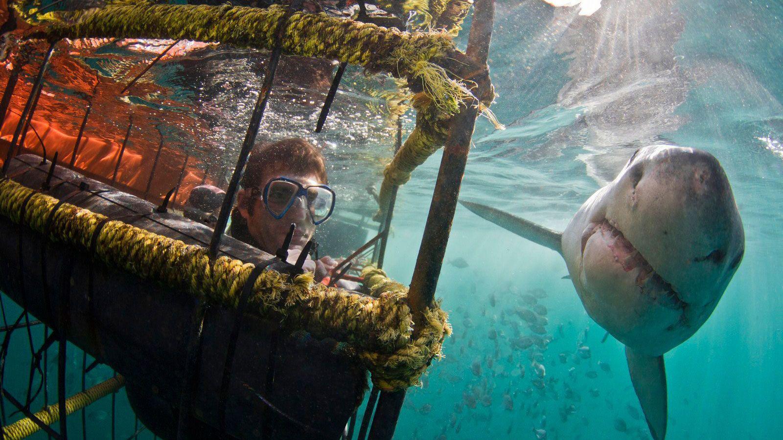 Tauchen im Haikäfig – Tagesausflug
