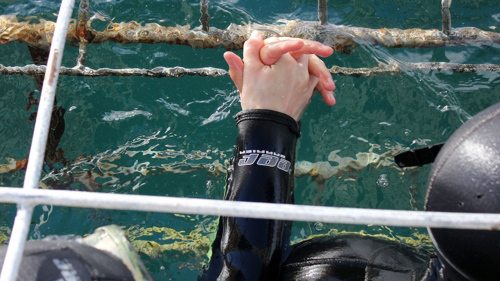Show item 3 of 5. Diver couple holding hands in underwater cages in South Africa