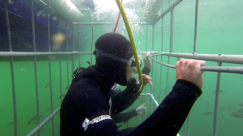 Diver inside underwater cage in South Africa