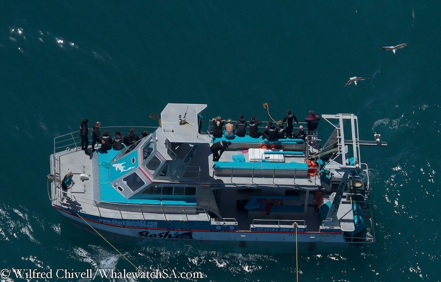 Show item 4 of 10. Great White Shark Cage Diving Full-Day Tour