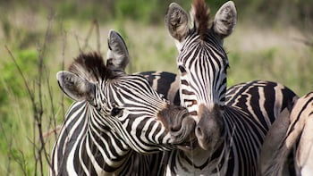 Aquila Private Game Reserve Full-Day Tour
