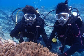 【OKINAWA / Motobu area】 Beach Diving for Certified Divers (2Dives)