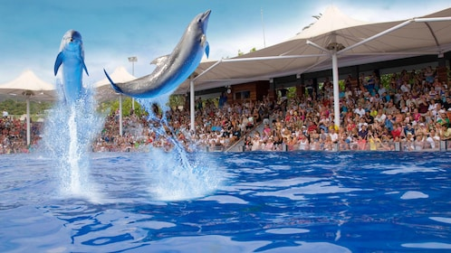 two dolphins performing tricks in front of an audience at marineland