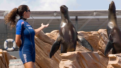 Trainer with sea lions at Marineland in Mallorca