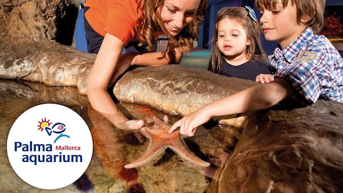 Children touching a starfish at the palma aquarium