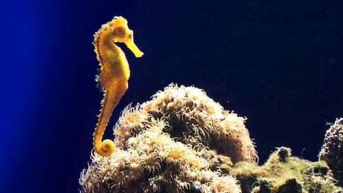 Seahorse at aquarium in Mallorca