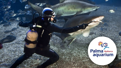 A scuba diver feeding sharks at the palma aquarium