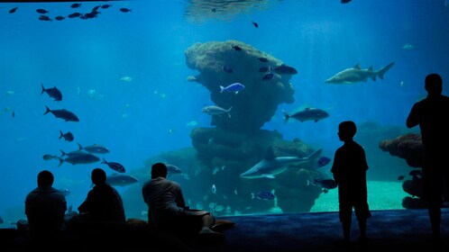 People looking at fish at the palma aquarium