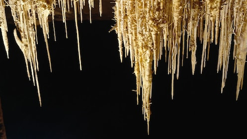 stalactites dripping into darkness in the caves Drach