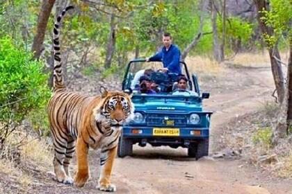 Ranthambore Wild Life Safari