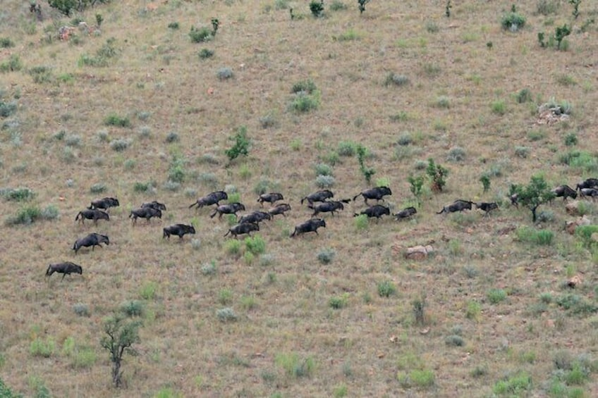 Show item 3 of 8. 4 Day All Incl. Private Kruger Park Safari and Transfer From Nelspruit