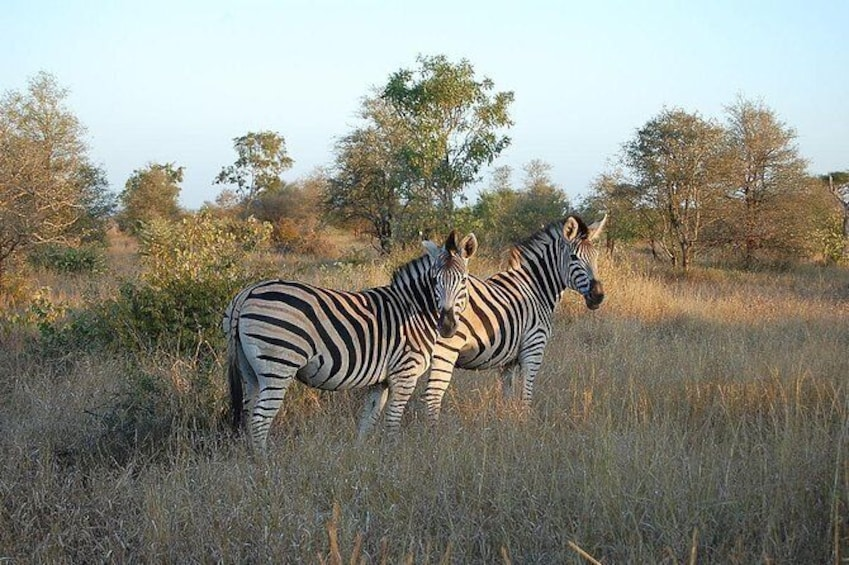 Show item 2 of 4. 3 Day All Incl. Private Kruger Park Safari Incl. Transfer From Nelspruit Airport
