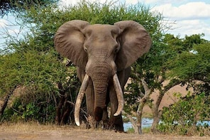 3 Day All Incl. Private Kruger Park Safari Incl. Transfer From Nelspruit Ai...
