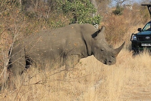 3 Day All Incl. Private Kruger Park Safari Incl. Transfer From Johannesburg