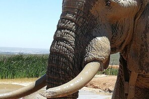 Addo Elephant Park Day Visit Plus 2 Hours in Open Vehicle with Park Ranger
