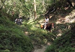 Combo - Jungle Horseback Riding Tour + Jungle Hiking Tour