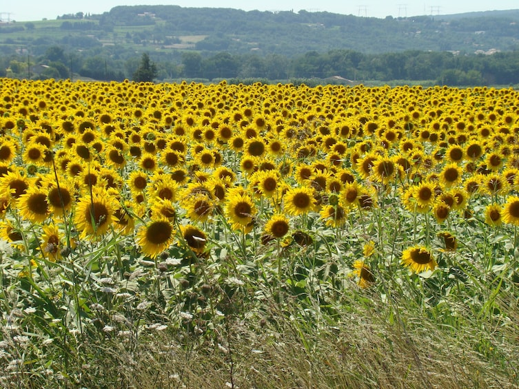 Show item 3 of 7. Toulouse to Carcassonne and Albi : Private Sightseeing Tour