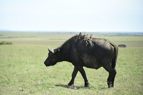 Maasai Mara Safari 3 Days