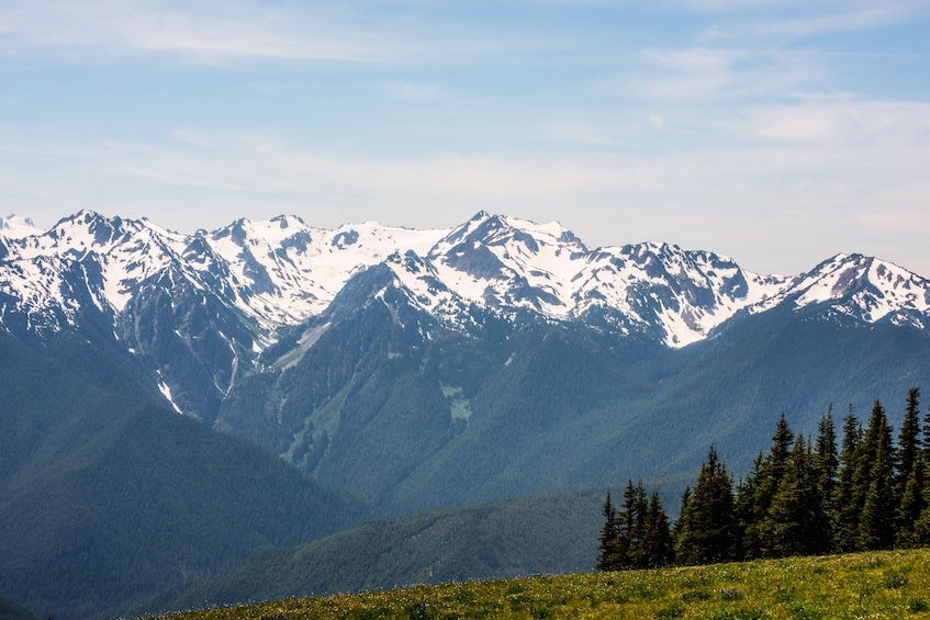 Olympic National Park Tour from Seattle