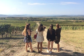Cité de Carcassonne and Wine Tasting Private Day Tour from Toulouse