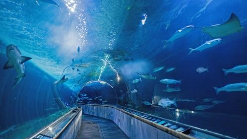 glass aquarium tunnel