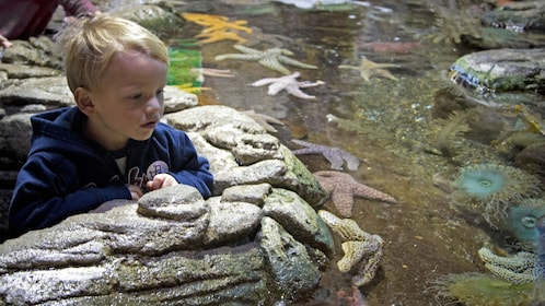 small boy looking at tide pool