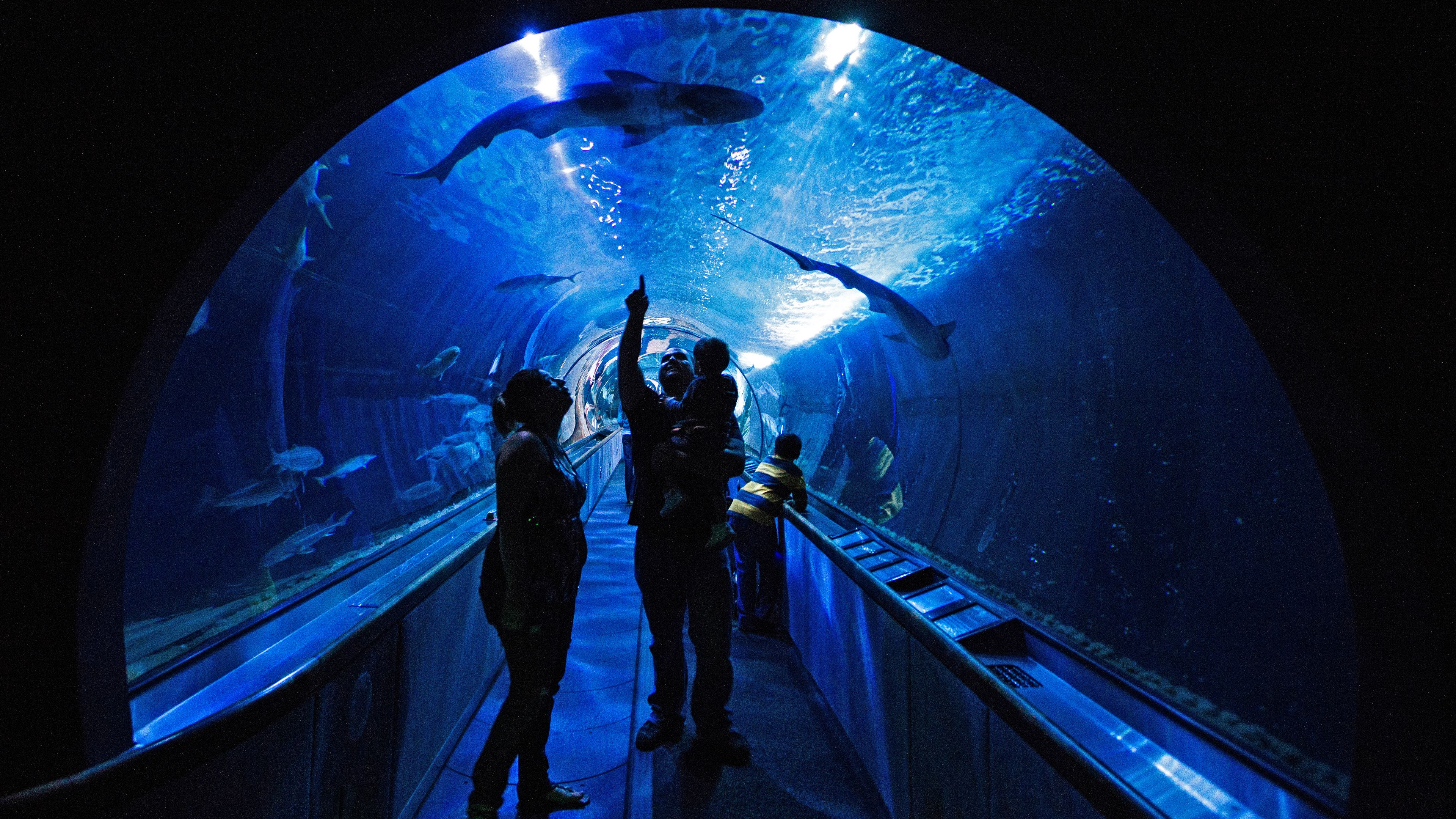 family in aquarium tunnel
