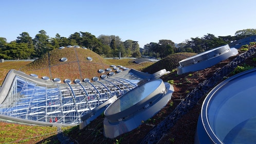 Rolling hills and fields of solar panels at the California Academy of Sciences in San Francisco