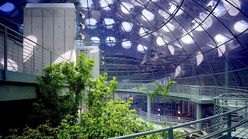 Inside the Rainforest Dome at the California Academy of Sciences in San Francisco